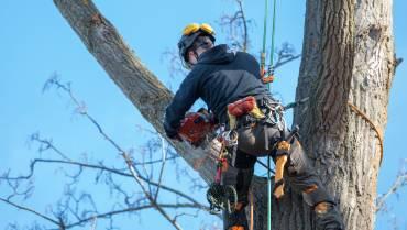 Baumfällung und Räumung